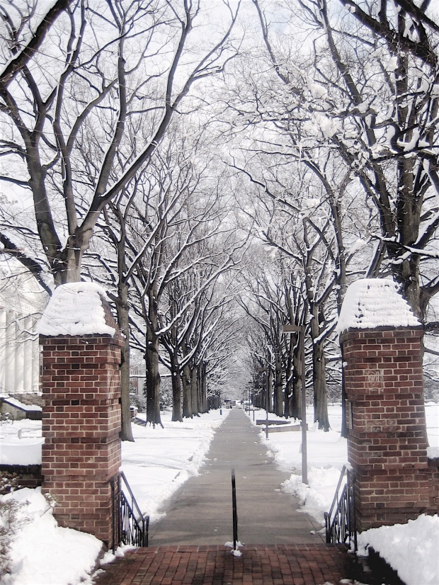 path_on_the_left_hand_side_of_mckeldin_mall_in_winter